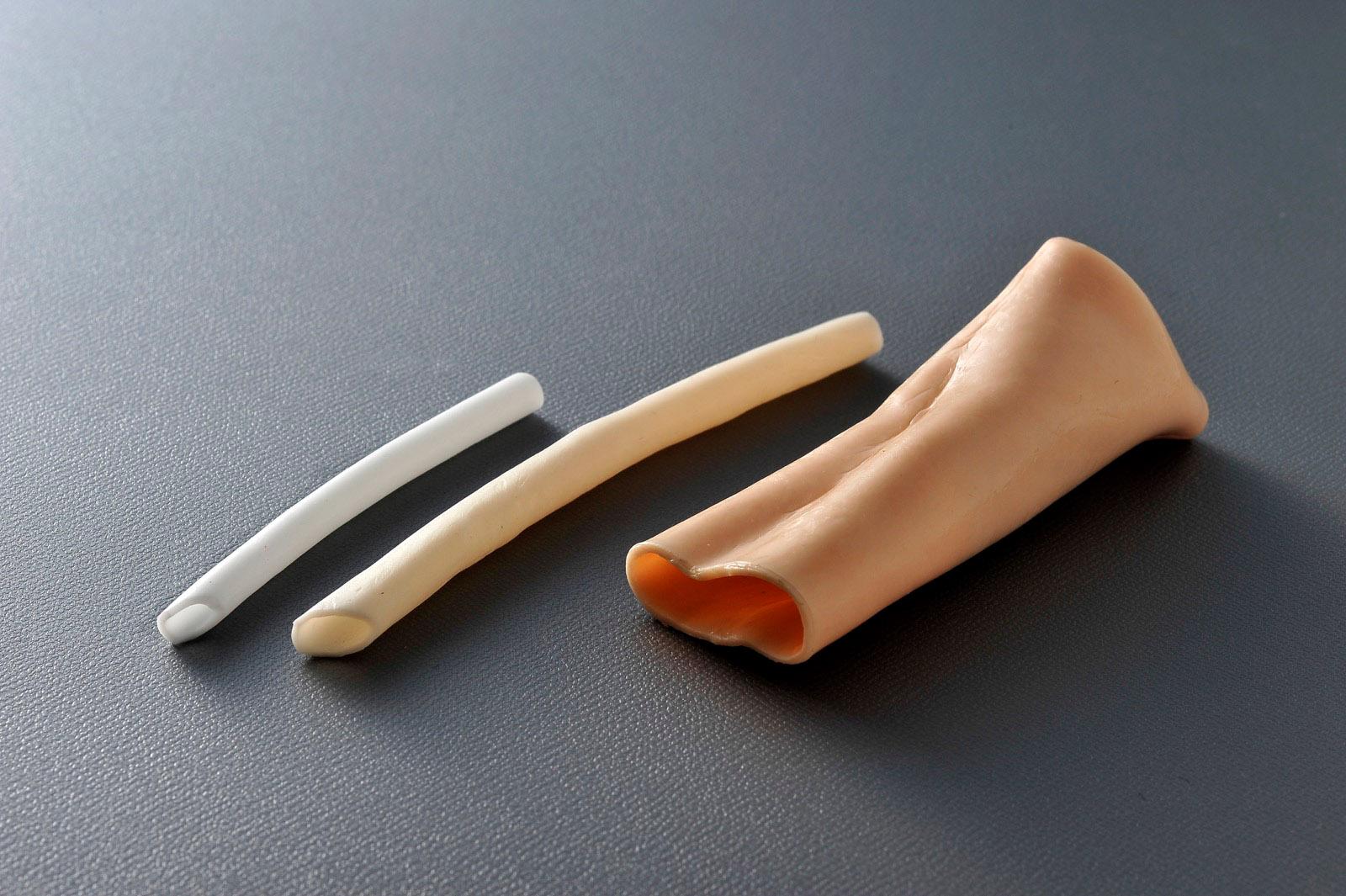 臓器モデル